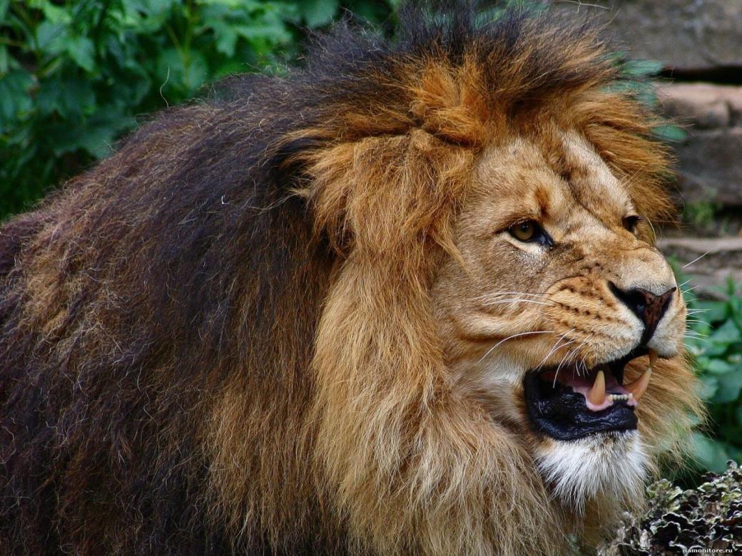 настоящее смотреть картинки про диких животных добавился, коментируй