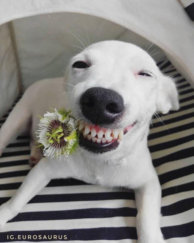 улыбающаяся собака фото замочки