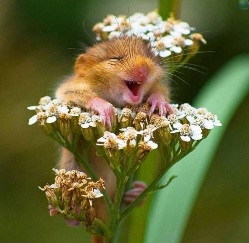 Оптимистичные веселые картинки