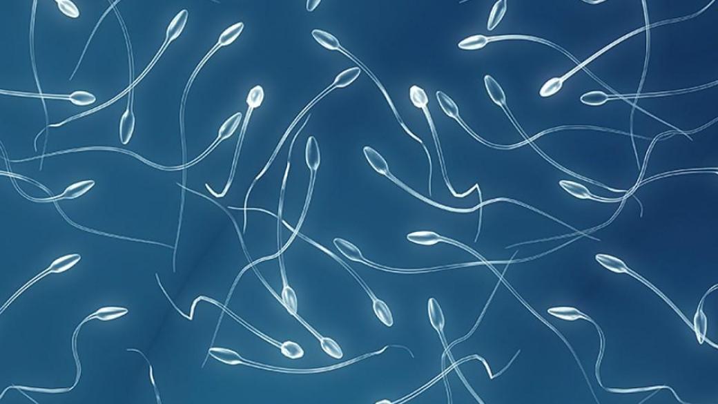 Что убивает сперматозоидов